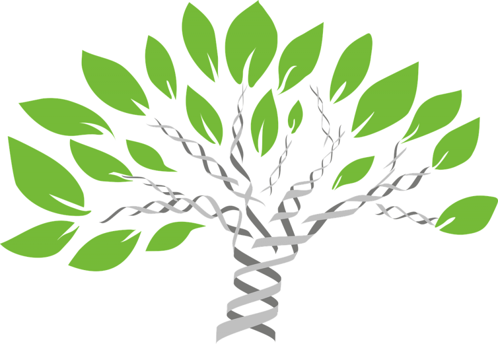 Looking for your next DNA class? Furthering your DNA education does not have to be hard. Online options abound! #genealogy #DNA #ancestors